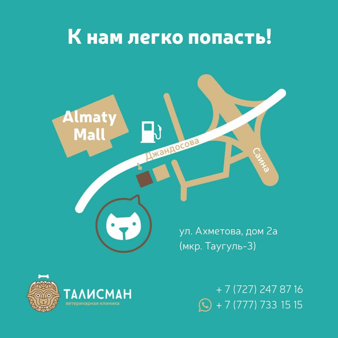 Vetclinika_Talisman_Almaty-1.jpg