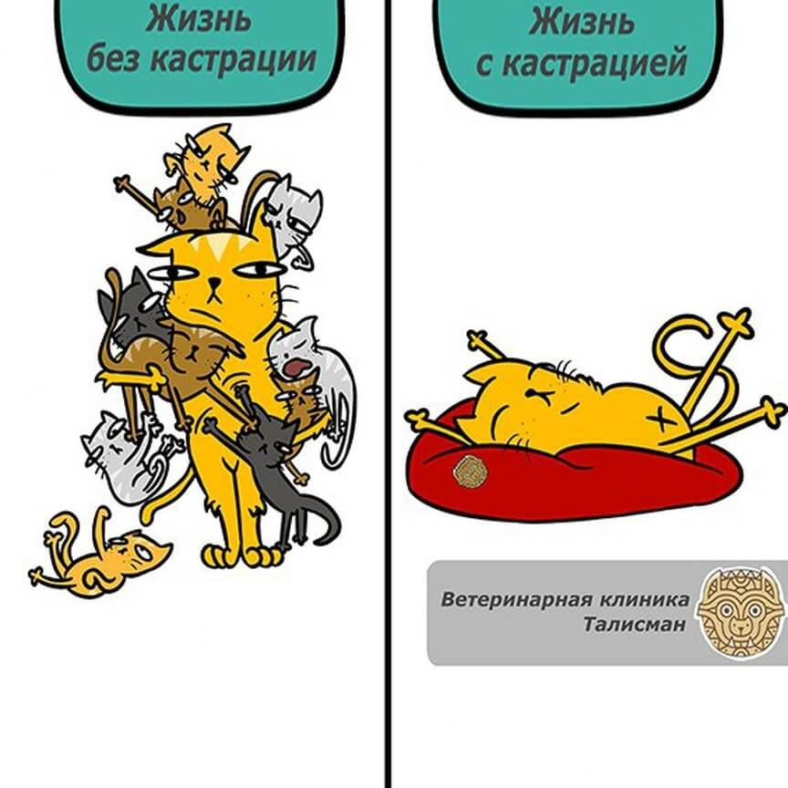 Ветеринарная клиника в Алматы: Акция по кастрации и стерилизации со скидкой 50%