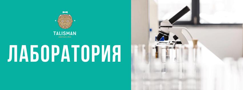Ветеринарная клиника в Алматы: О ветеринарной клинике