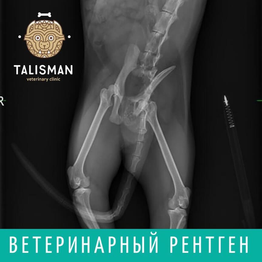 Ветеринарная клиника в Алматы: Рентген