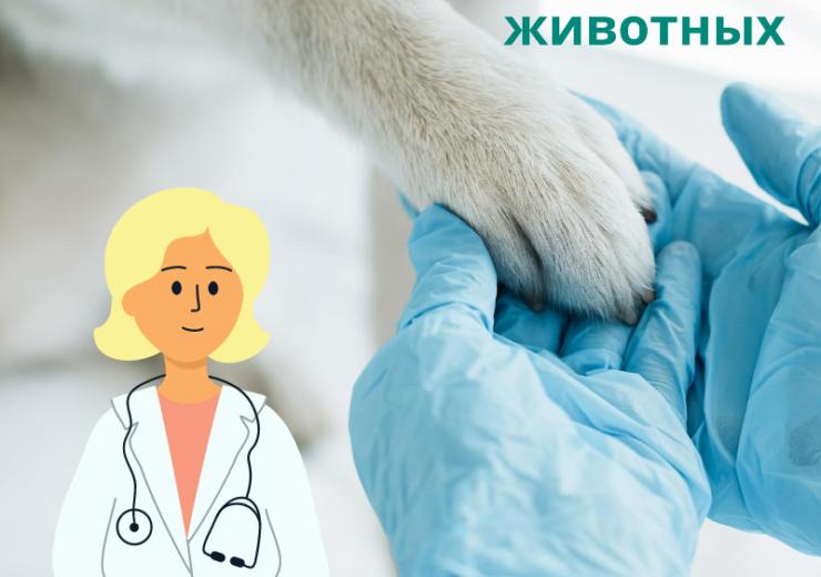 Ветеринарная клиника в Алматы: Ветклиника в Алматы